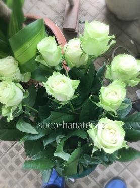 グリーンのバラ、グリーンティー