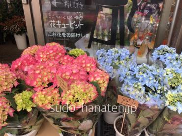紫陽花で、夏海と、ピーチ姫です 夏海は、名前の通り夏の海を思わせるような、青い紫陽花です
