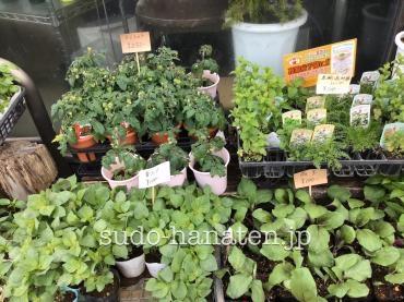 野菜の苗、バジル、パセリ、シソ、茄子、赤唐辛子、シシトウ、ミント、ミニトマト、ハーブミックス